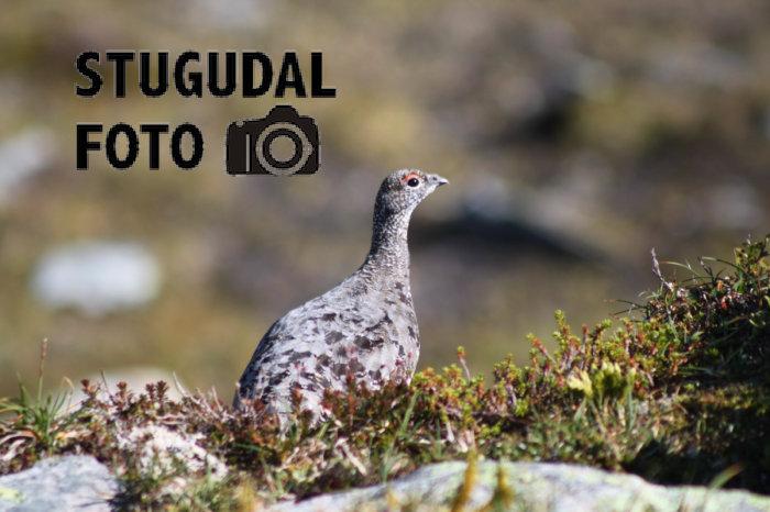 Hjemmesiden til Stugudal foto